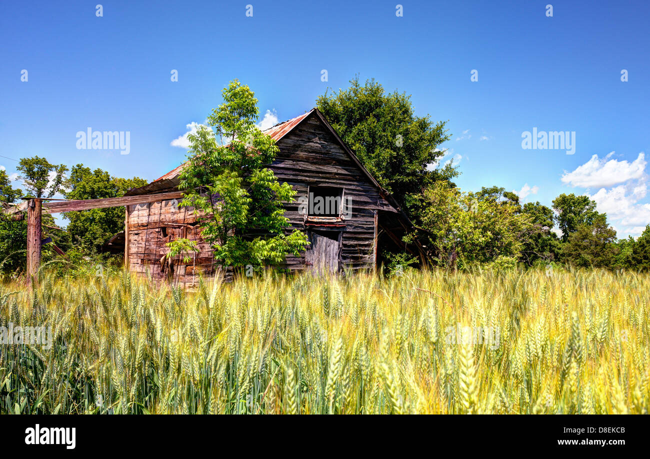 Old abandoned barn and wheat in a rural North Georgia landscape. - Stock Image