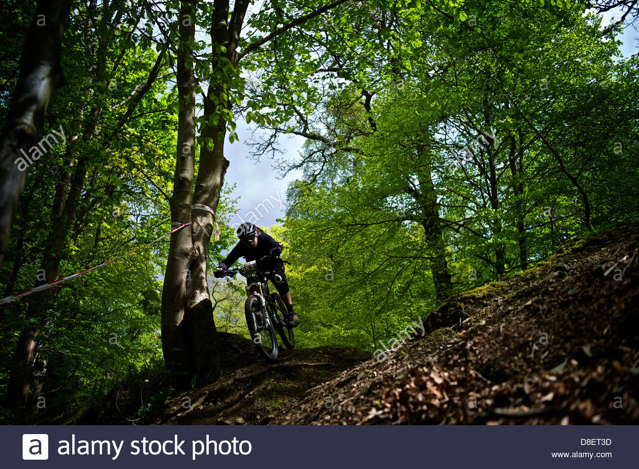 A mountain biker needs all his focus as he descends at speed over unpredictable terrain at Glentress trails. - Stock Image