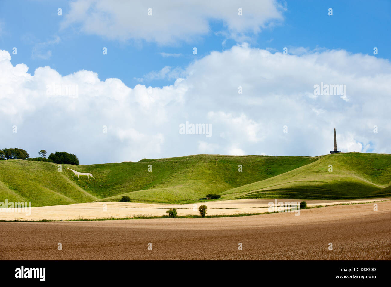 The Cherhill Downs. Wiltshire, UK. - Stock Image