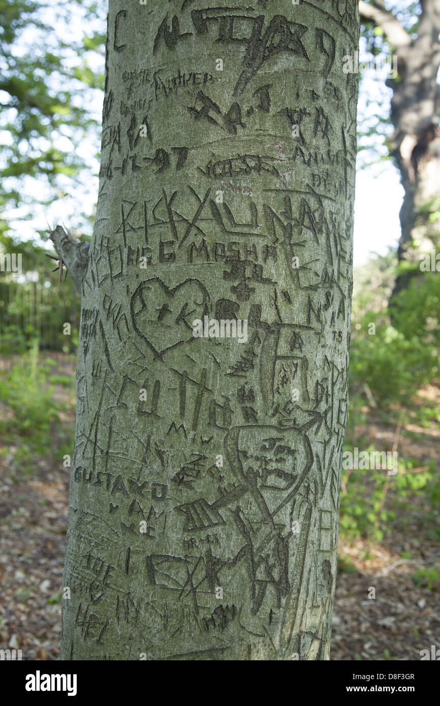 Name Carved Tree Trunk Stock Photos Name Carved Tree Trunk Stock
