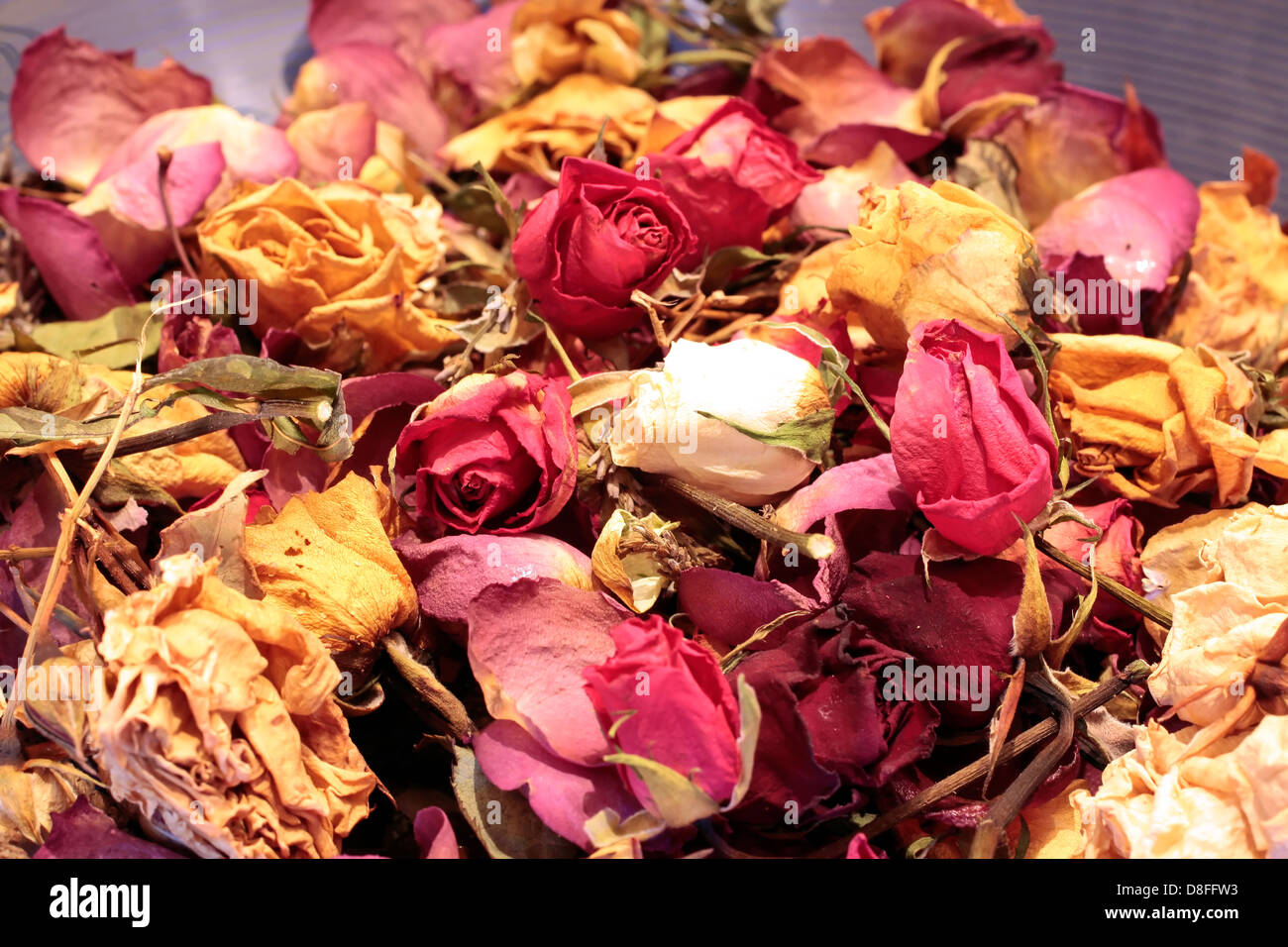 Close-up of a potpourri of colorful dried roses - Stock Image
