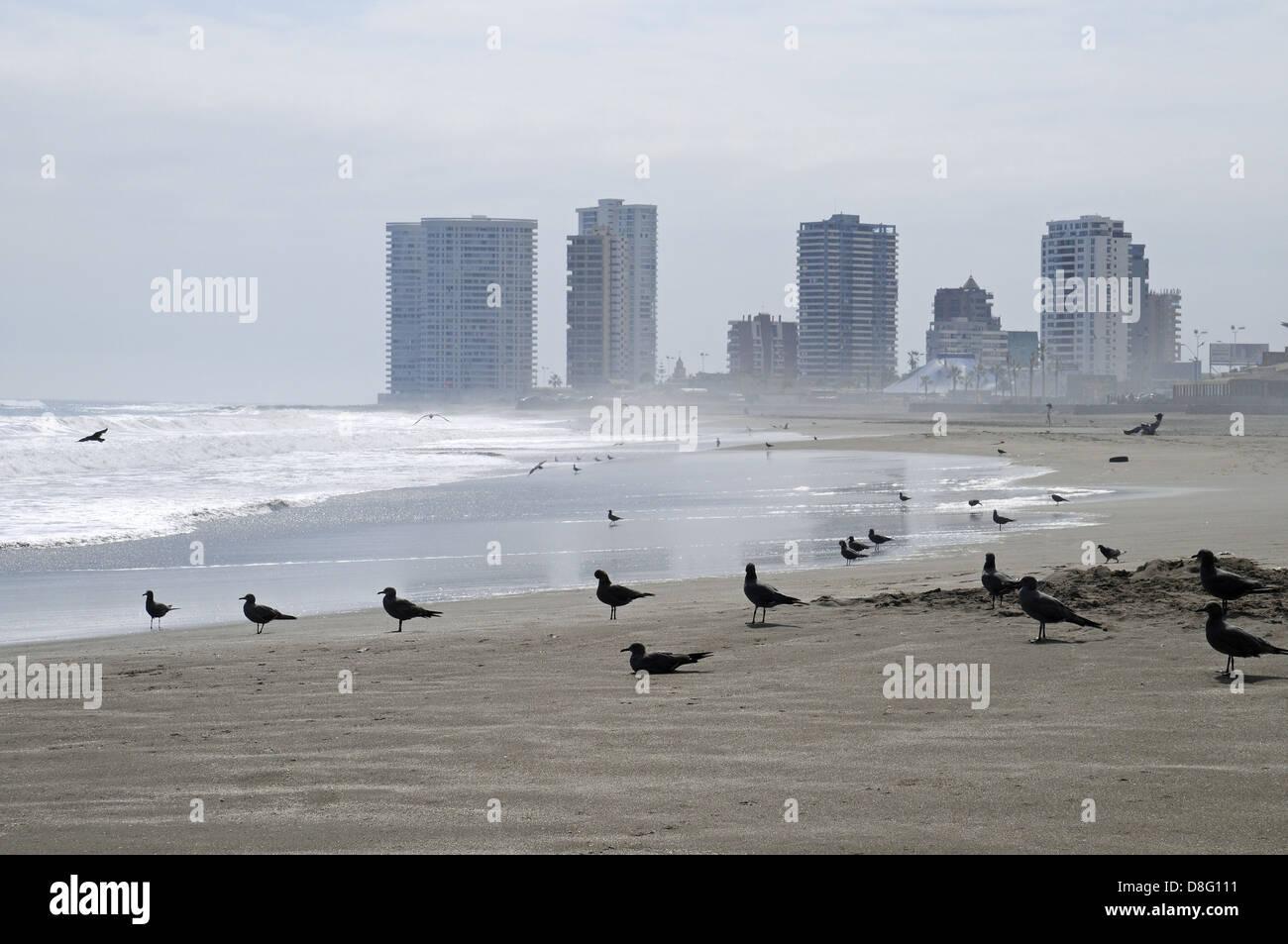 seabirds - Stock Image