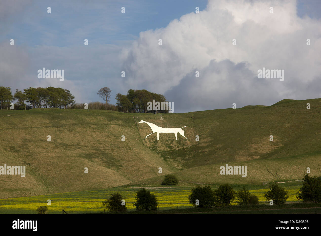 Cherhill White Horse from the nearby fields. Stock Photo