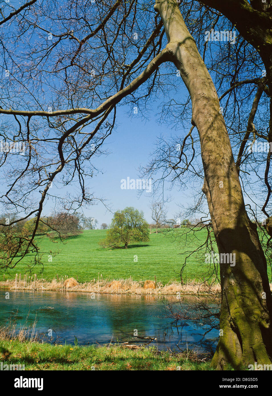 Early Spring, River Gade, Hertfordshire - Stock Image