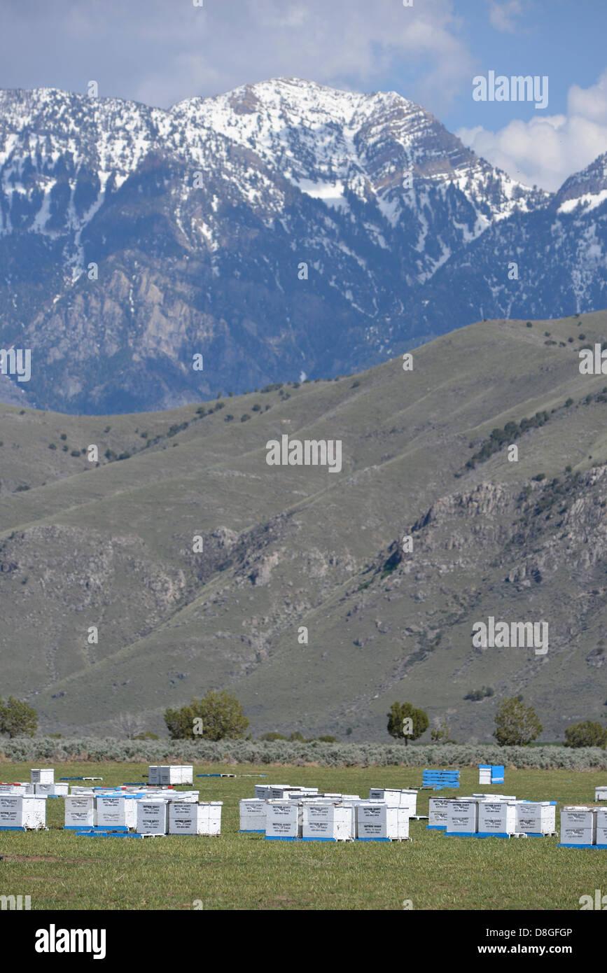 Bee hives below Utah's Wasatch Range. - Stock Image