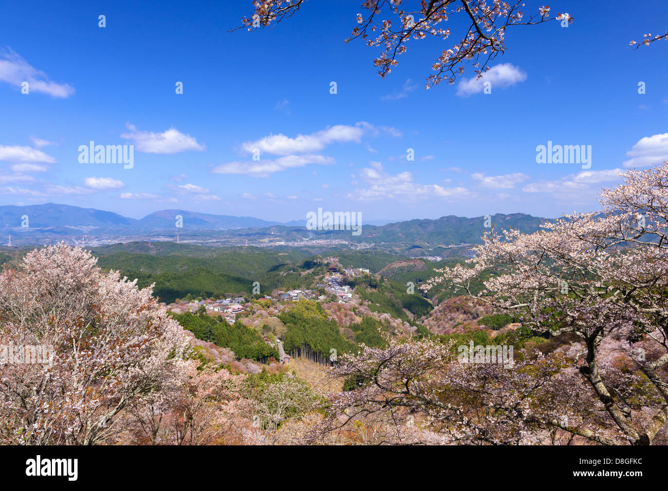 Yoshinoyama Cherry Blossoms - Stock Image