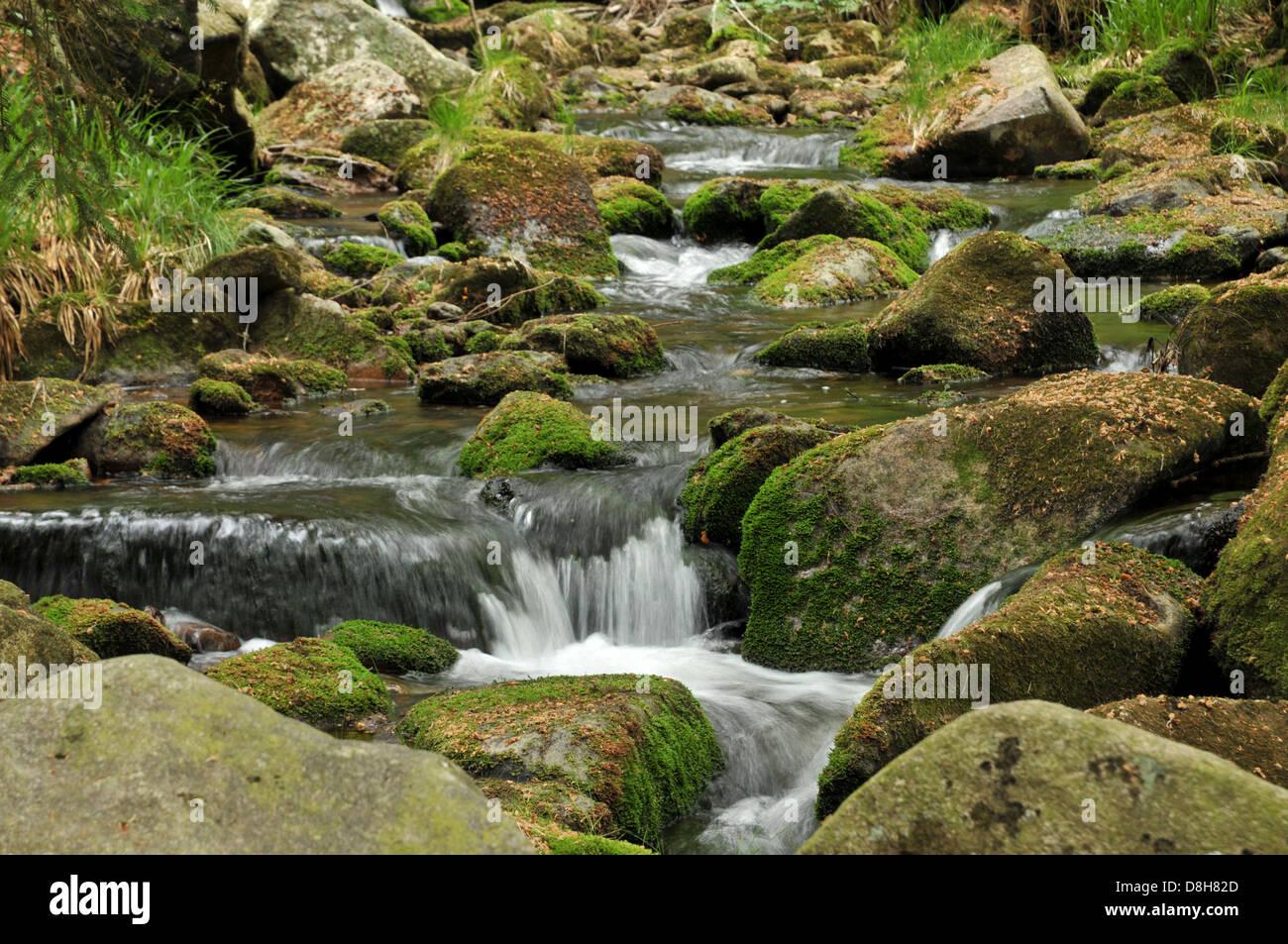 woodland Stream - Stock Image