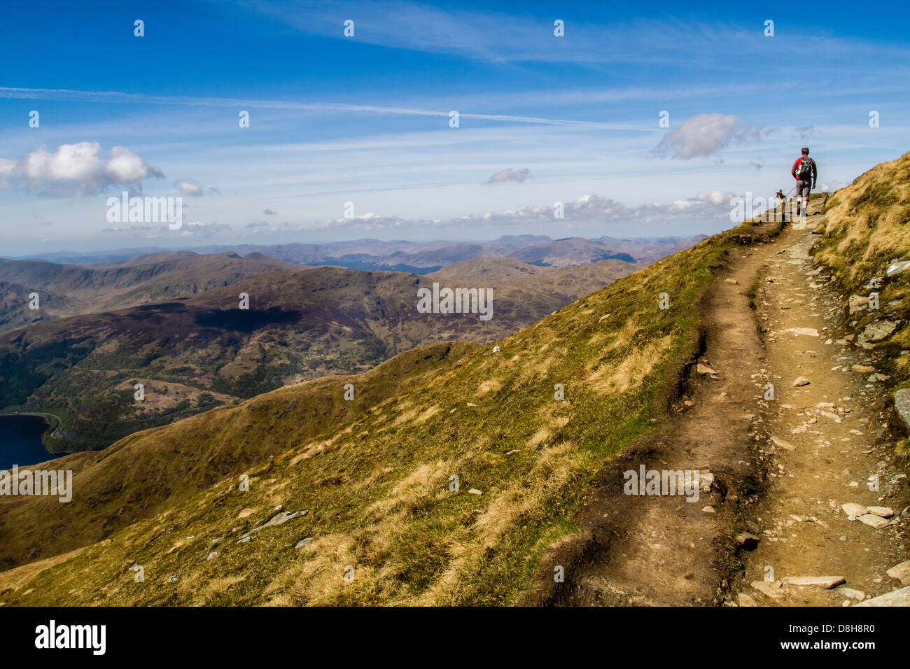 Walker and dog approaching the summit of Ben Lomond - Stock Image