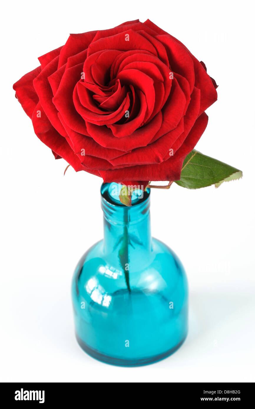 Red rose in blue vase - Stock Image