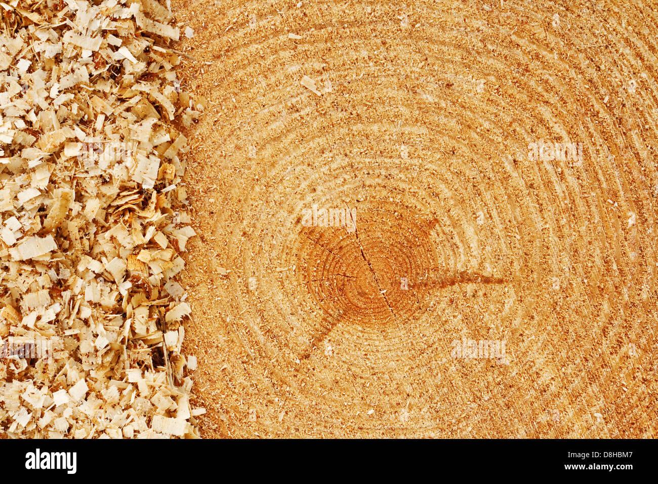 Growth rings on freshly cut fir tree with saw dust border good background for the lumber industry - Stock Image