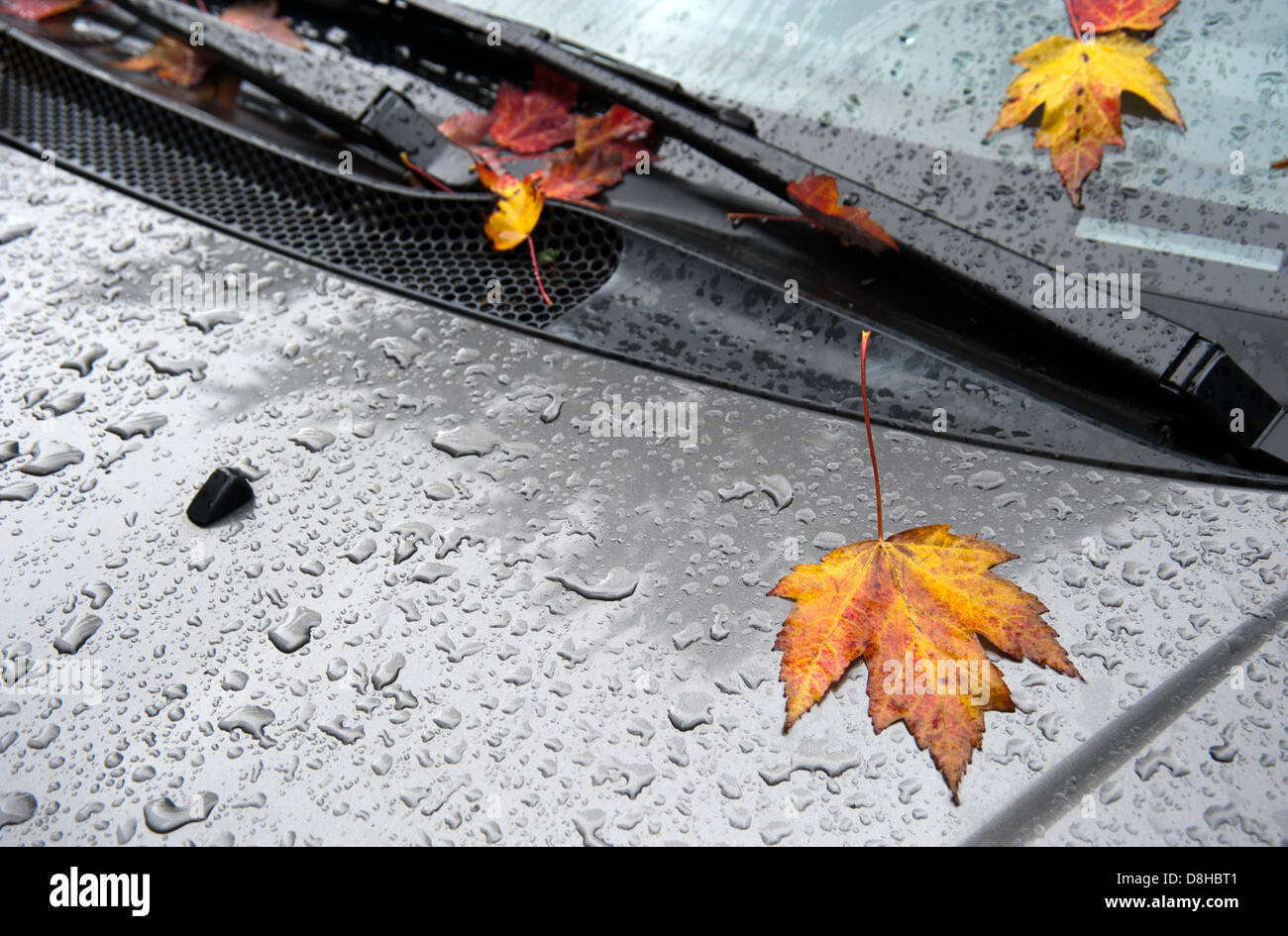 Autumn leaves and rain drops on hood of a car and on windshield - Stock Image