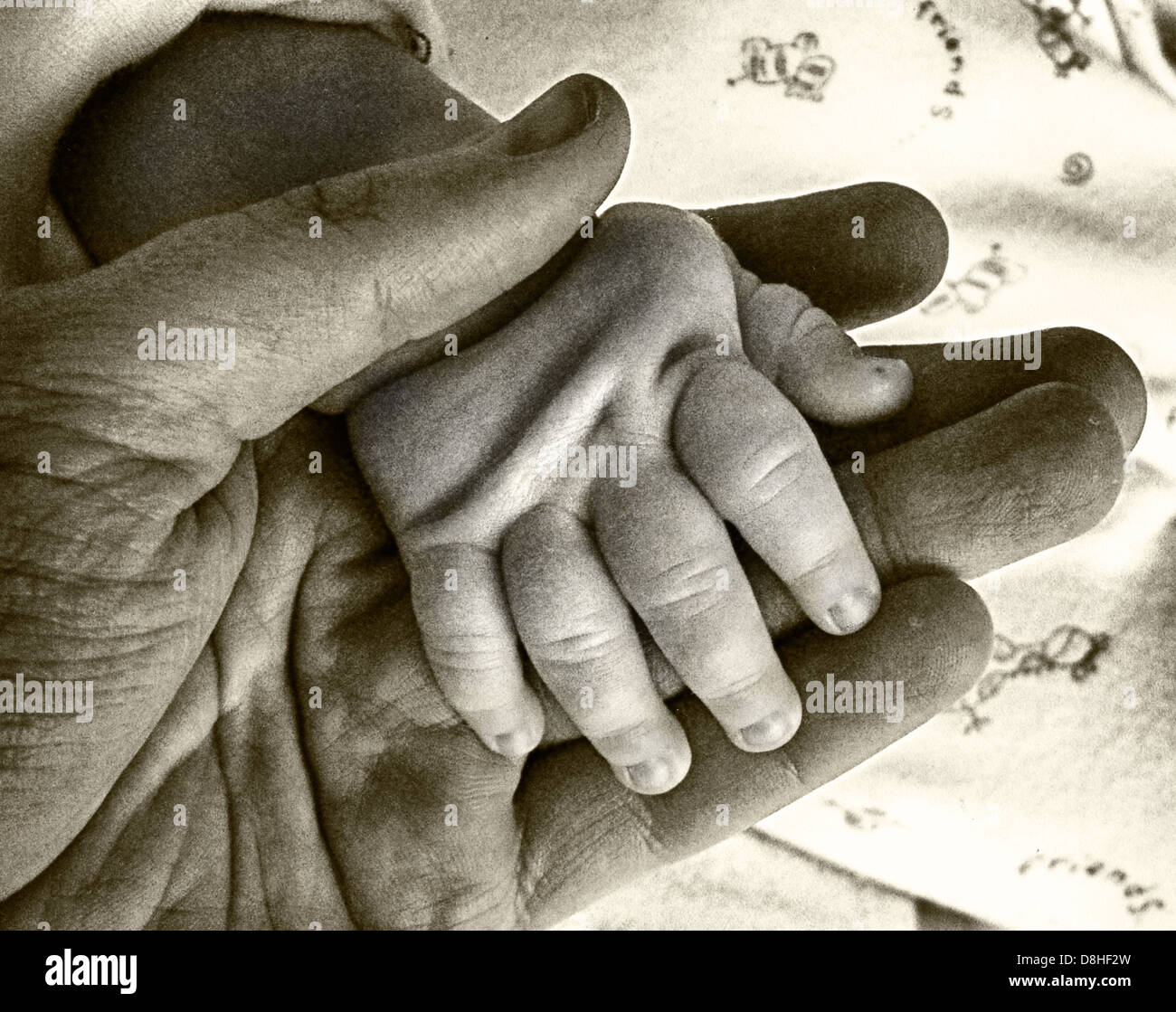An adult holding his babies hand for the first time - Stock Image