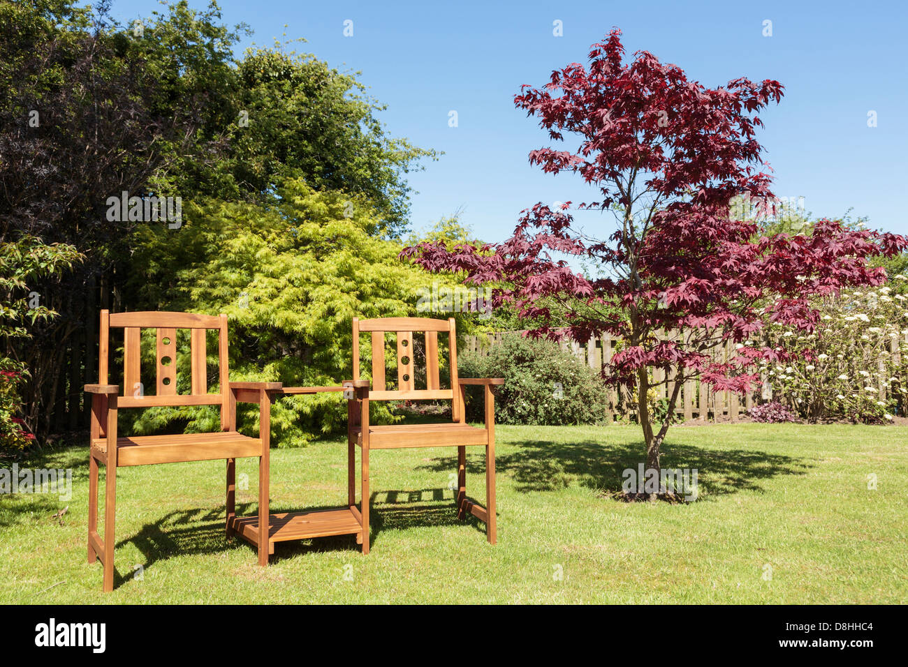 Companion seat or love bench with a table between two seats in sustainable wood by an Acer tree on a domestic back - Stock Image