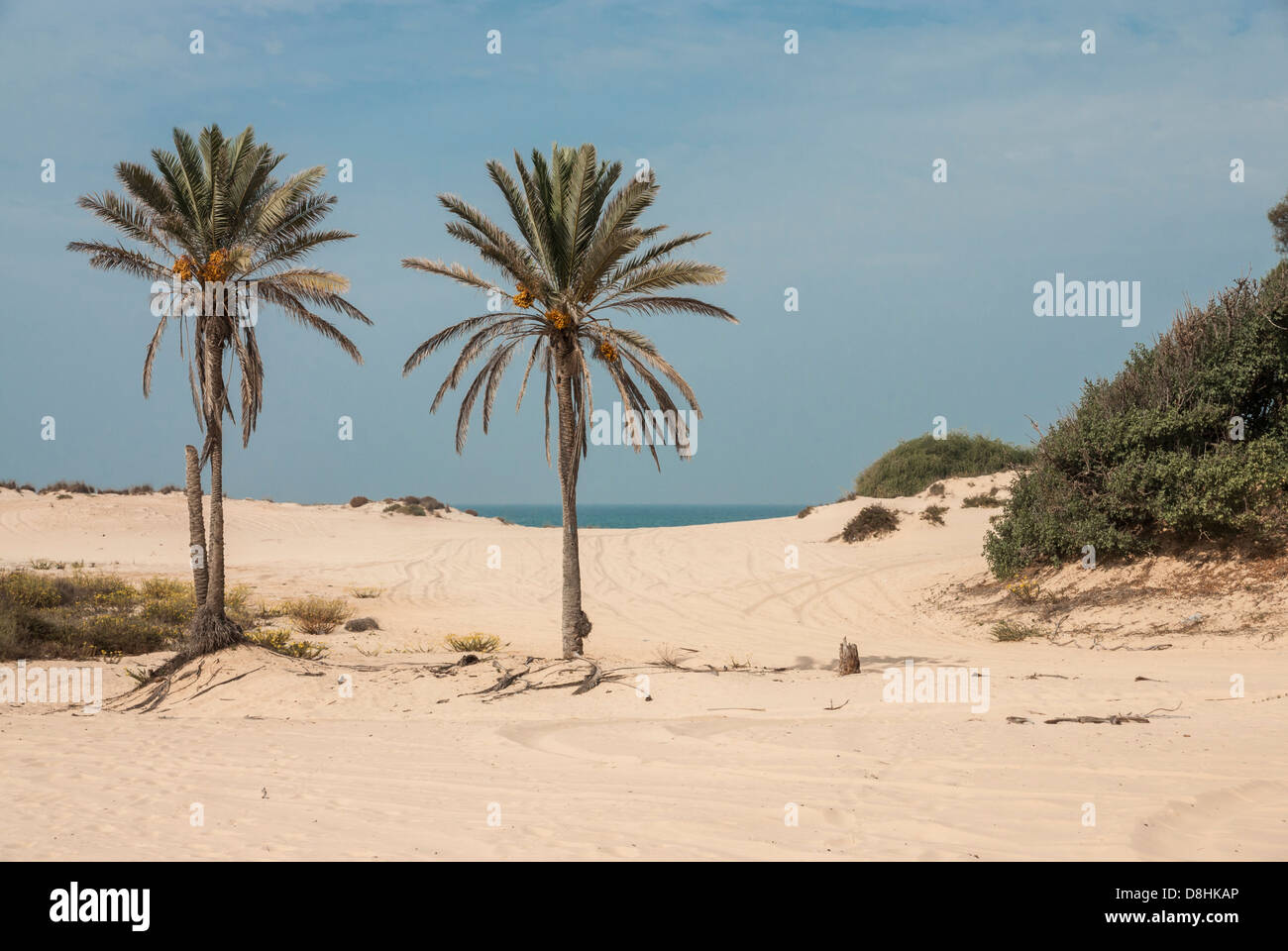 Israel. Two palm trees on a Sandy beach at Nitzanim, near the city of Ashkelon Stock Photo