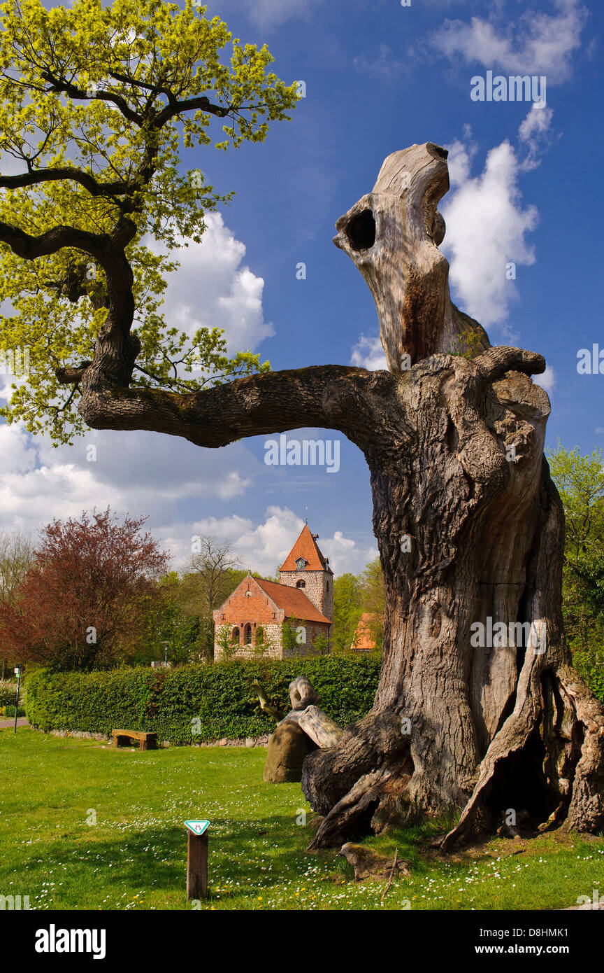1000 year old oak at dötlingen with st. firminus church, wildeshausener geest, oldenburg district, lower saxony, - Stock Image