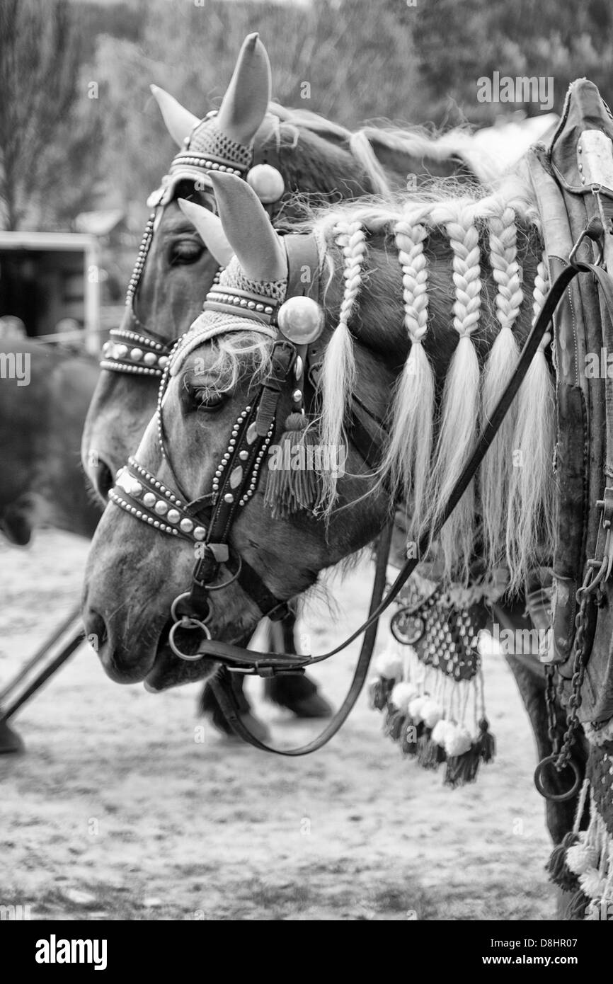 Horses with tresses - Stock Image