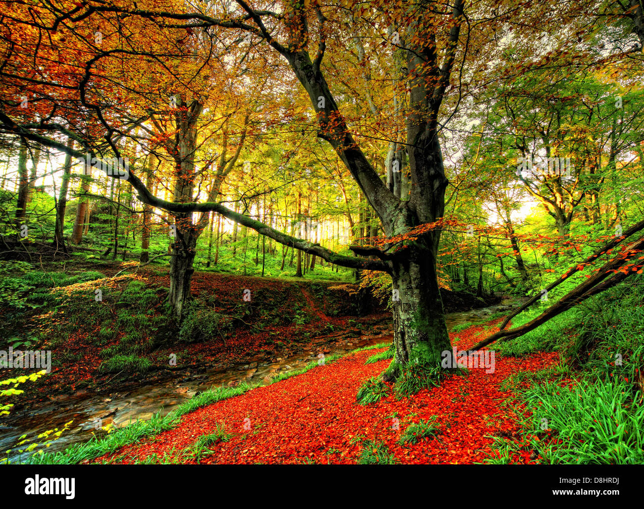 Autumn forest scene at Humbie Woods , East Lothian, Scotland UK - Stock Image