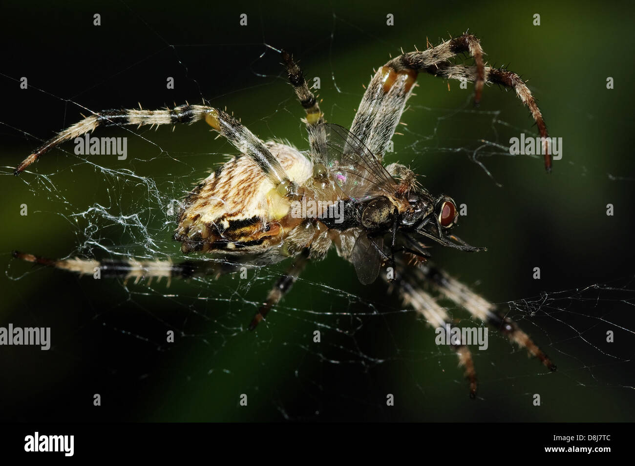 Bottom View of a Spider - Stock Image