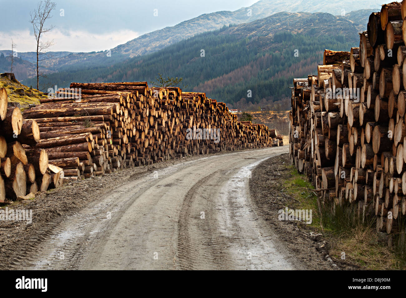 Forestry at Polloch and Loch Shiel - Stock Image