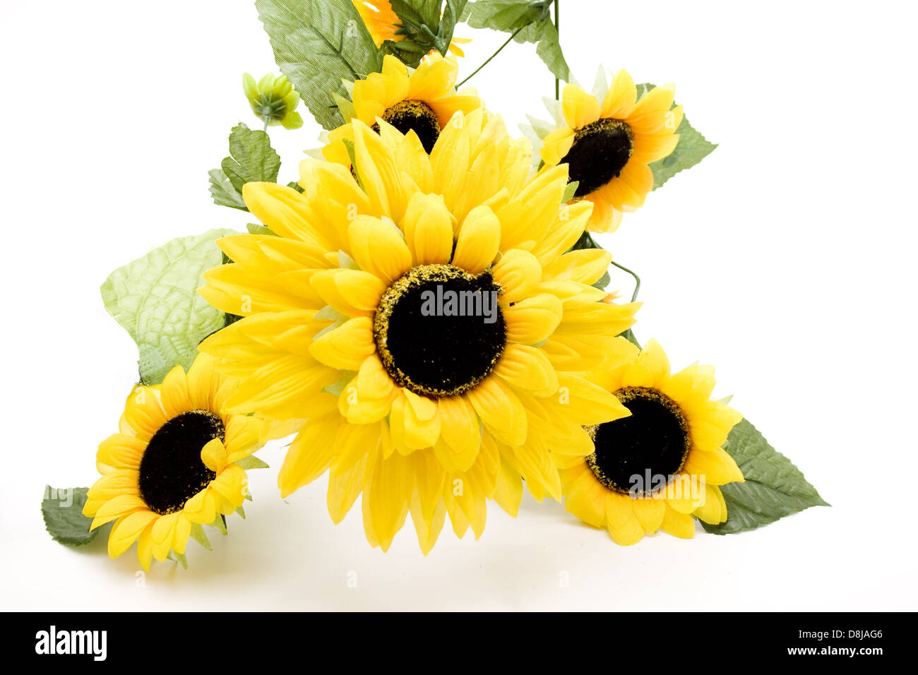 Blossoms of sunflowers - Stock Image