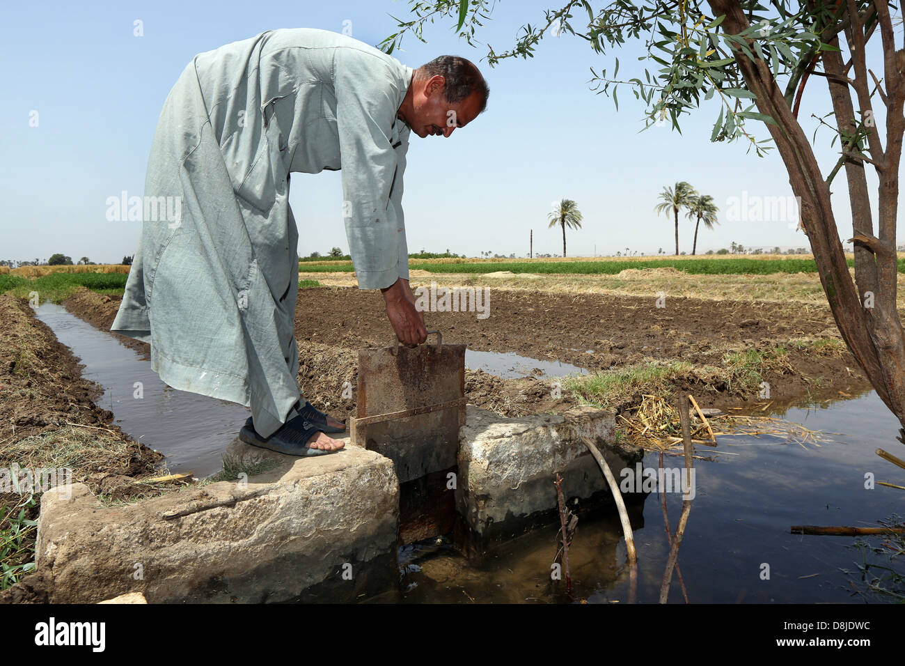 Farmer opens a smal water canal from river Nile. Irrigation system to water his farmland, Upper Egypt - Stock Image