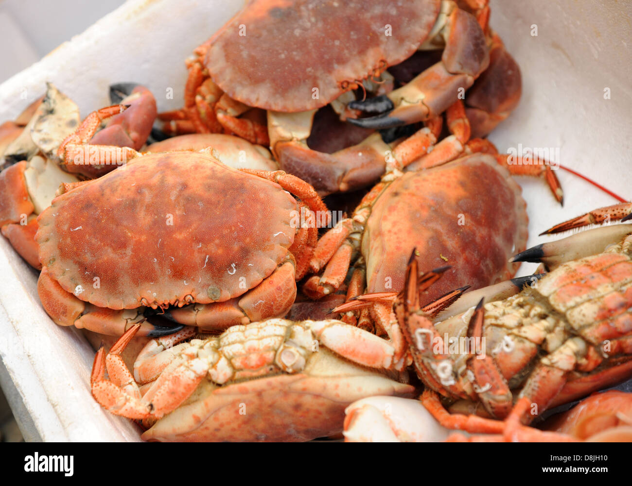 Crab, cooked and ready for the table. - Stock Image