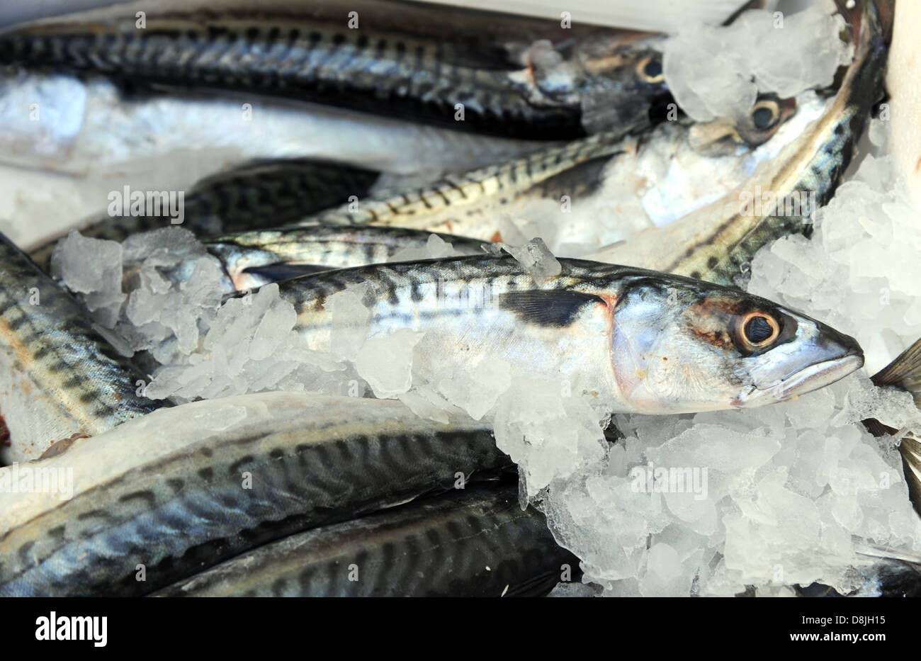 Mackerel on a fishmongers stall - Stock Image
