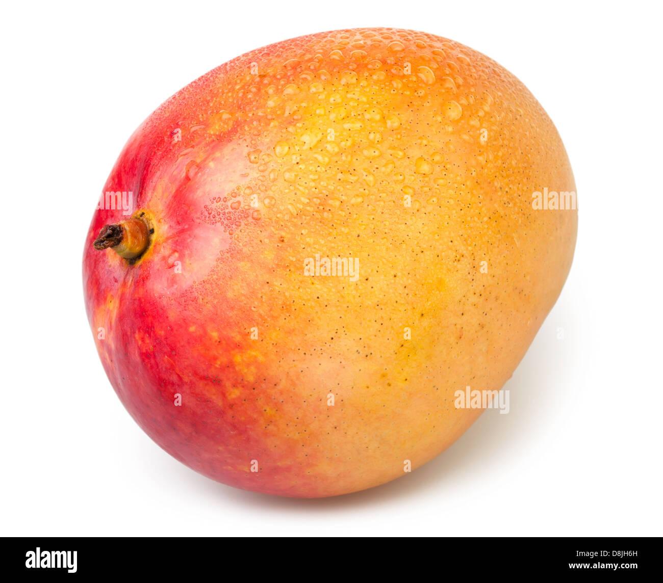 mango one wet on white background - Stock Image
