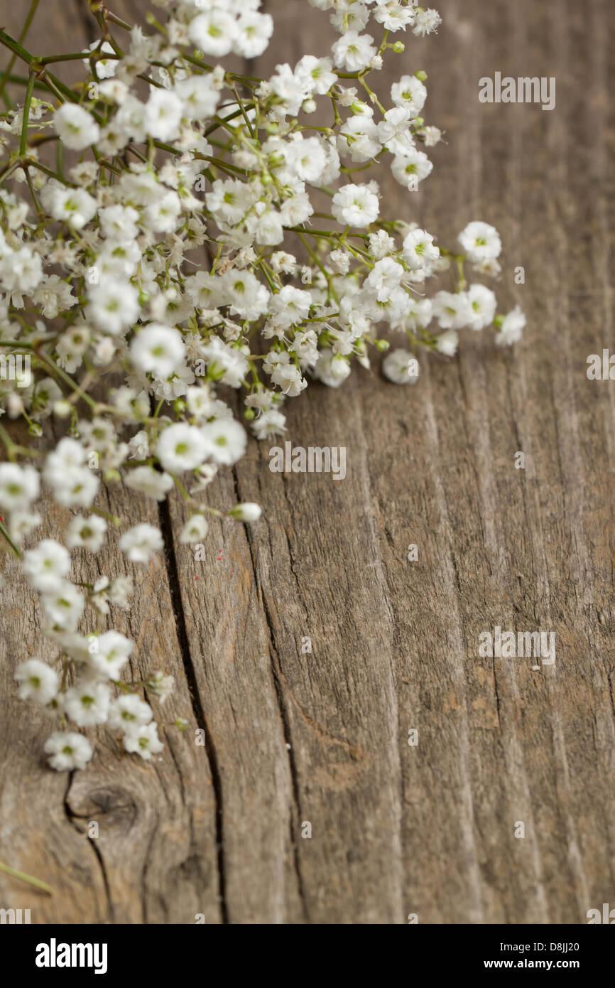 Bunch of gypsophila babys breath flowers on old wooden table bunch of gypsophila babys breath flowers on old wooden table izmirmasajfo