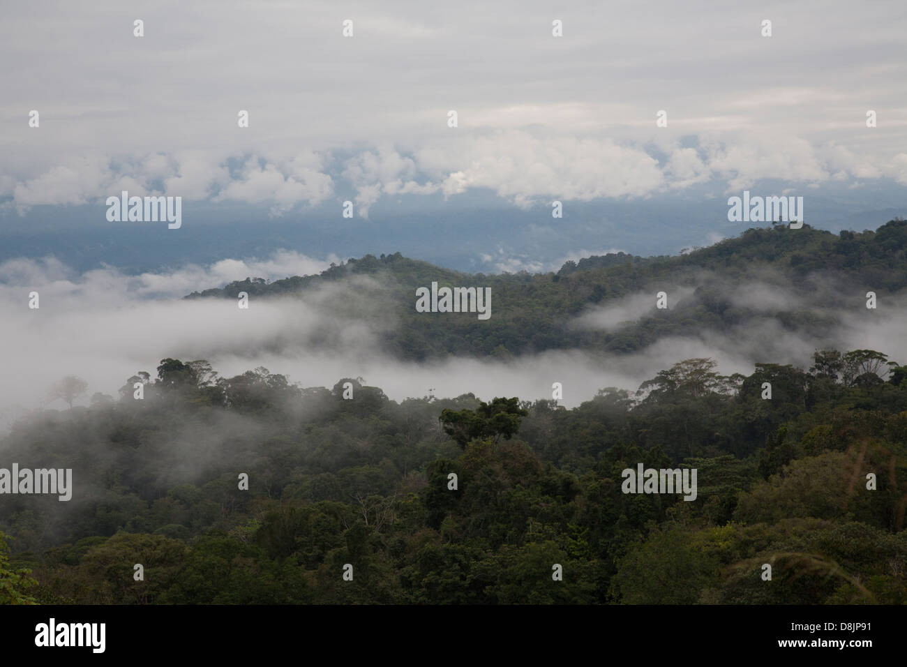 Cloud Forest, Valle Central, Highlands, Costa Rica - Stock Image