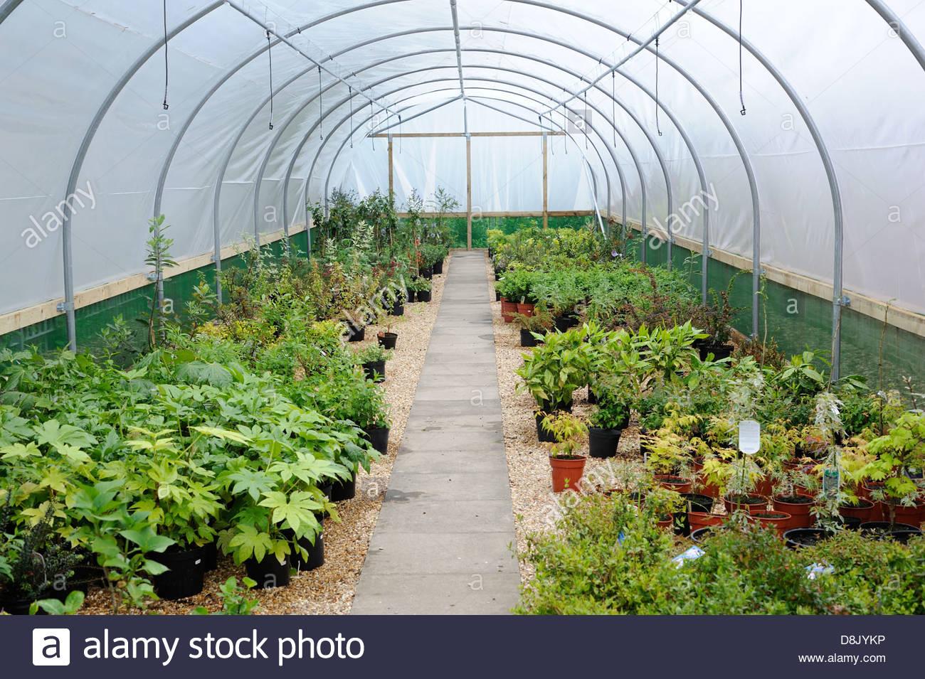 Garden Nursery. - Stock Image