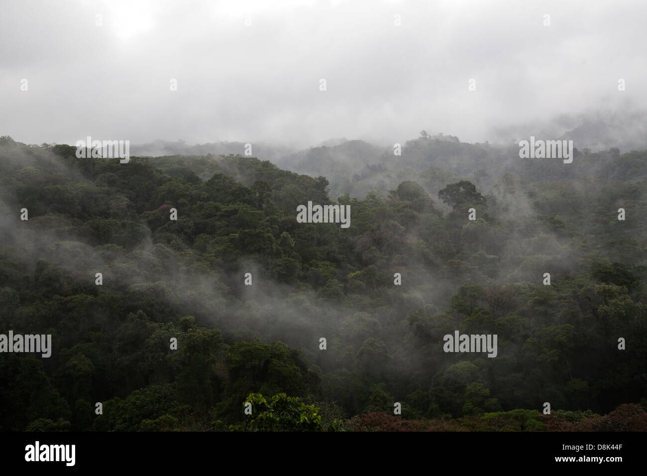 Cloud forest in the central highlands of Costa Rica - Stock Image