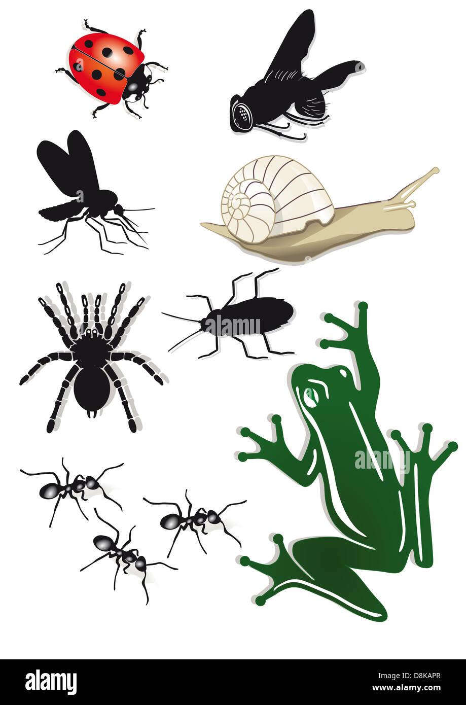 Creepy Crawlies - Stock Image