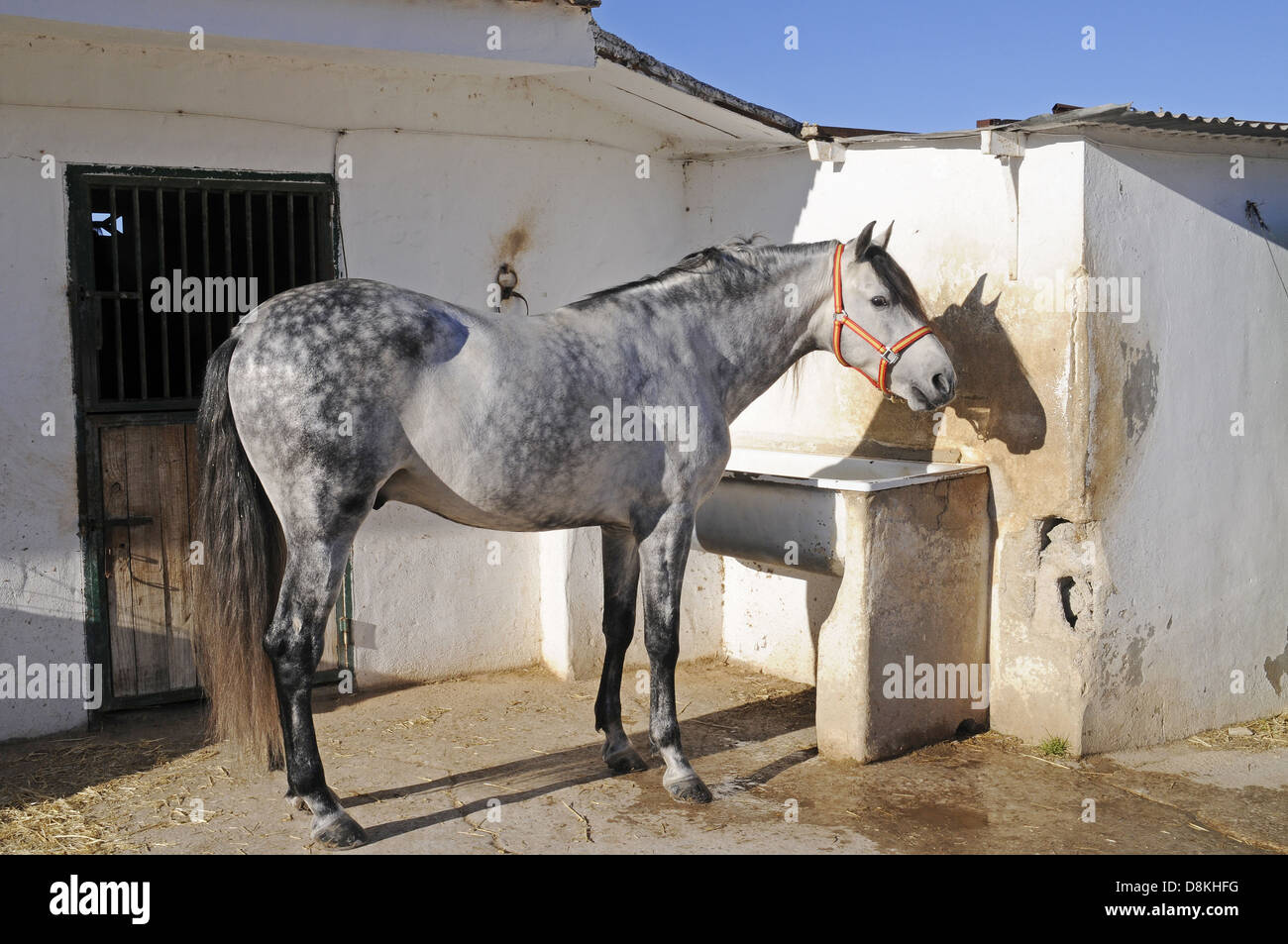 Standing Horse - Stock Image
