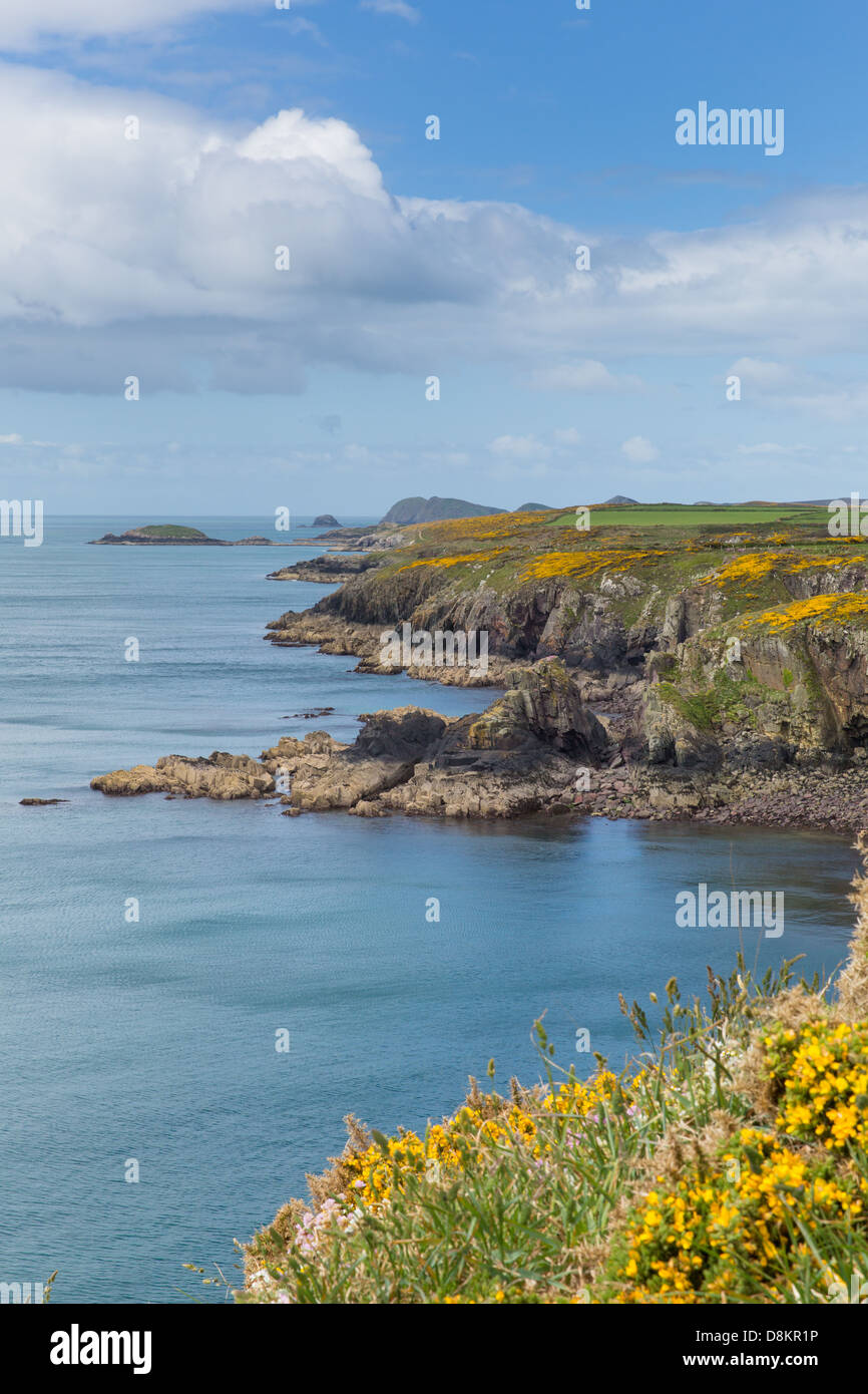 Pembrokeshire Coast Path known as Llwybr Arfordir Sir Benfro in Welsh forms part of the Wales Coast Path - Stock Image