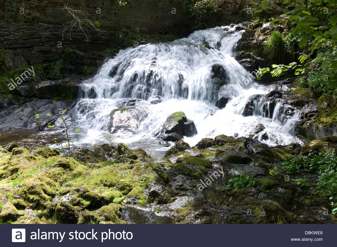 The 'Fairy Falls', Trefriw, Conwy Valley, North Wales, UK Stock Photo