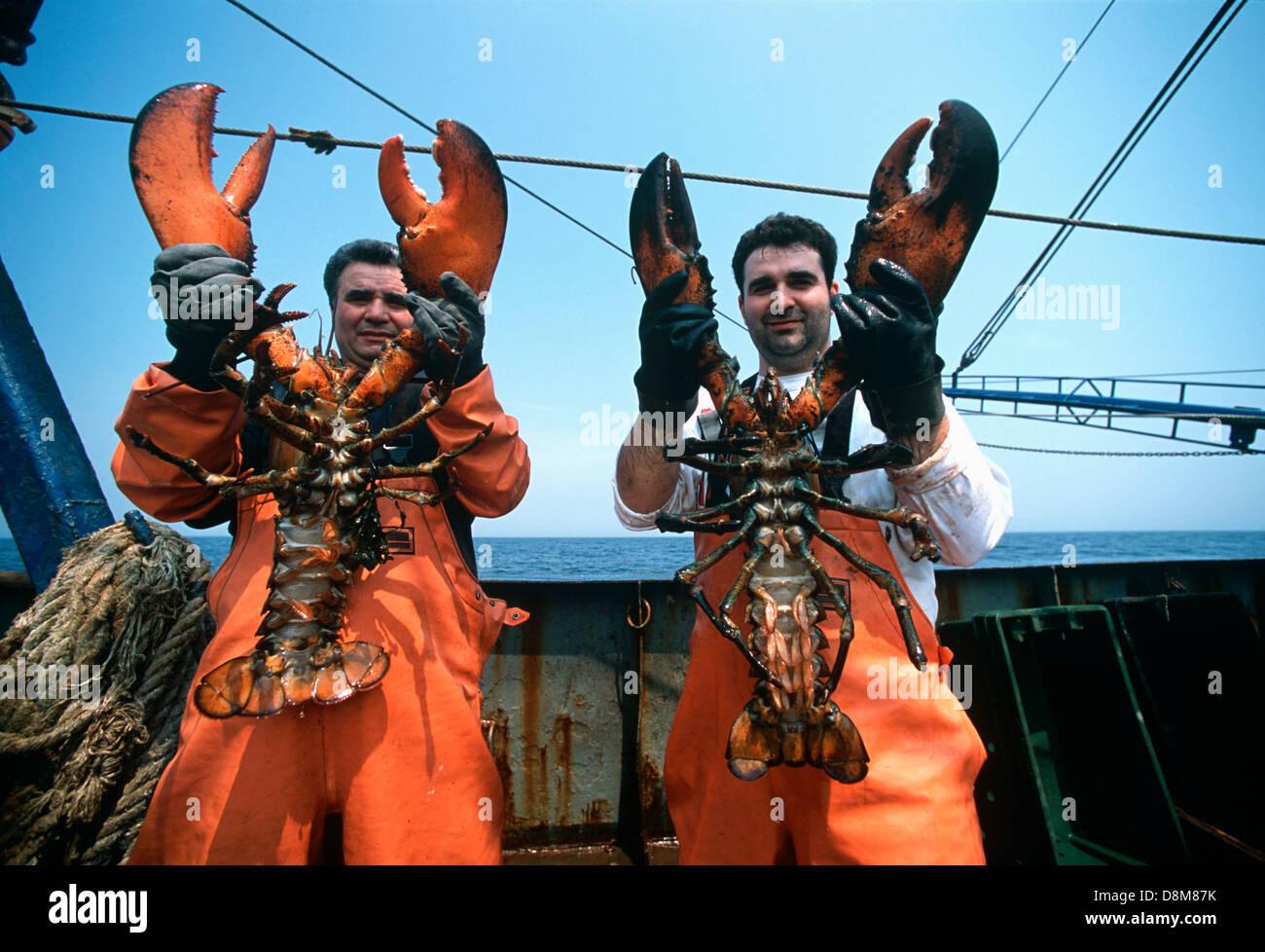 Fishermen hold 15lb lobsters (Homarus americanus) caught in a dragger net. Stellwagon Bank, Gloucester, Massachusettes - Stock Image