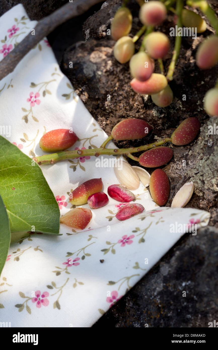 Fresh pistachios in Bronte, Sicily, on a napkin on lava soil, where some of the more tasty pistachios grow on the - Stock Image