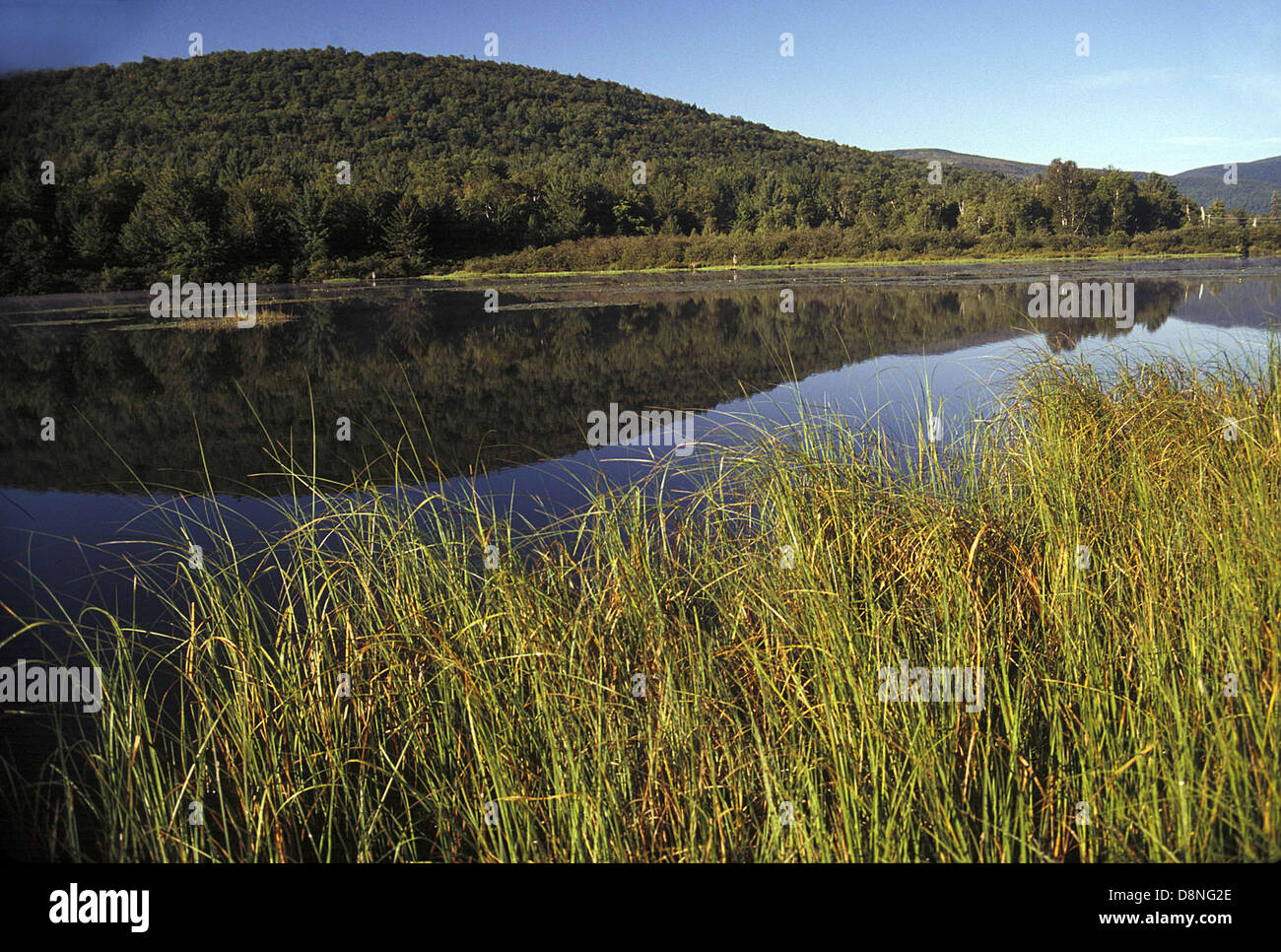 Wetland scene in the Catskills region of southern New York. - Stock Image