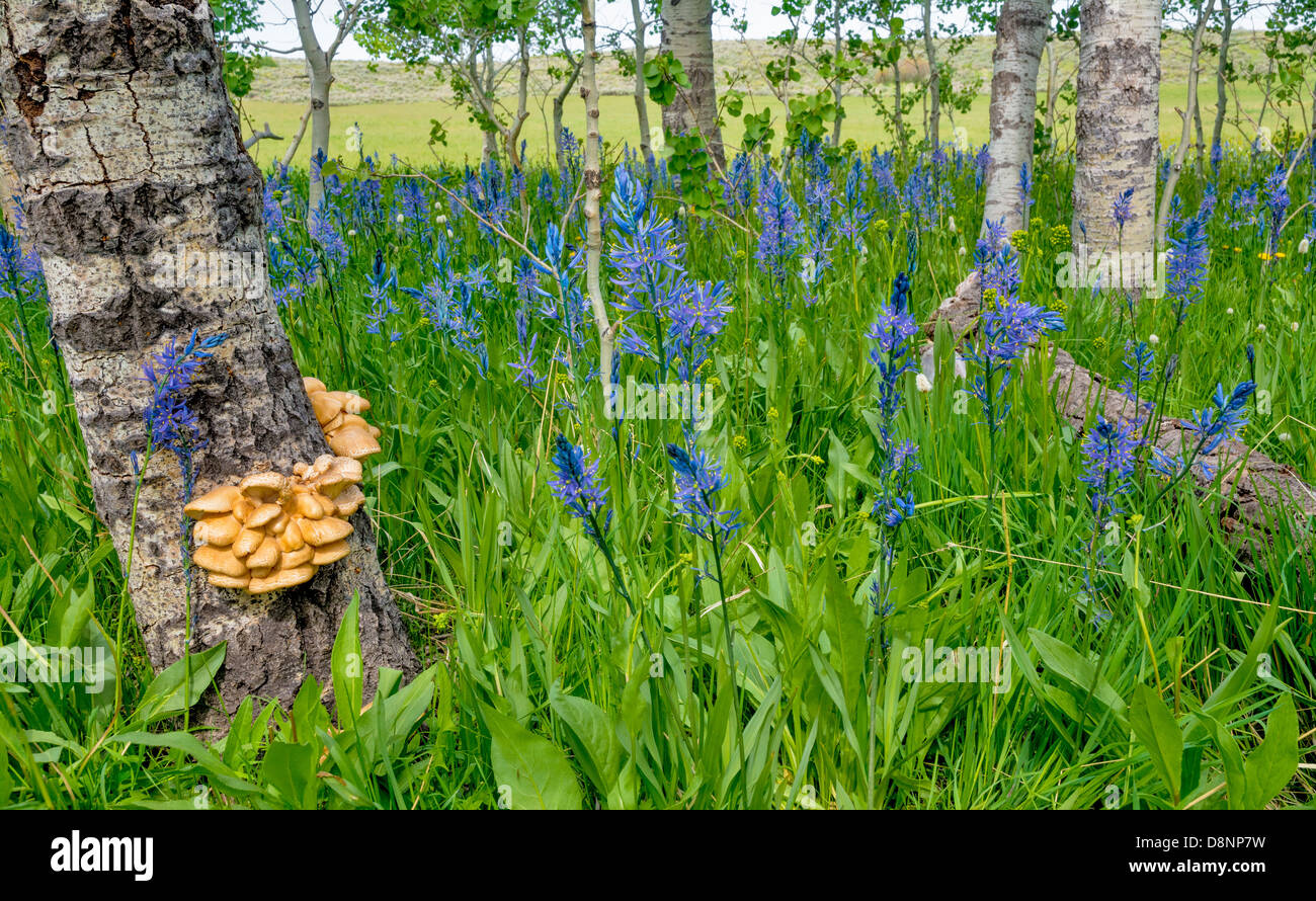 Spring flowers cover a forest floor stock photo 57026813 alamy spring flowers cover a forest floor mightylinksfo