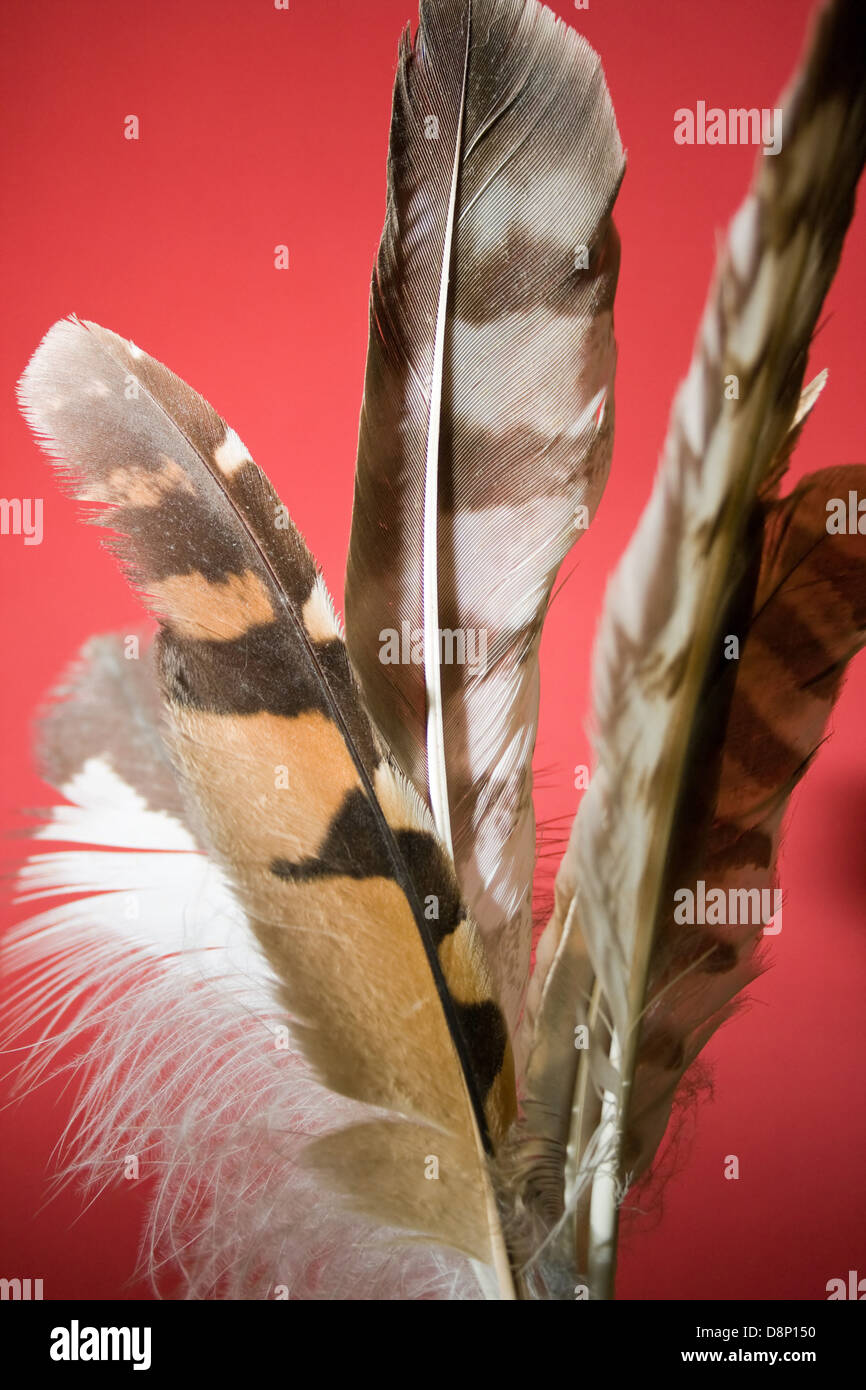 Group Of Feathers From Different Birds Of Prey Stock Photo Alamy