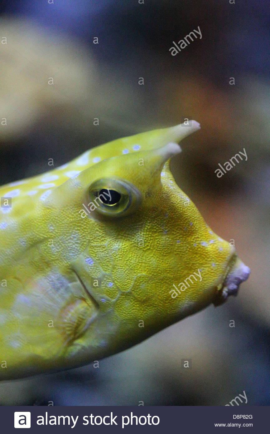 Tropical fish in Bristol Aquarium - Stock Image