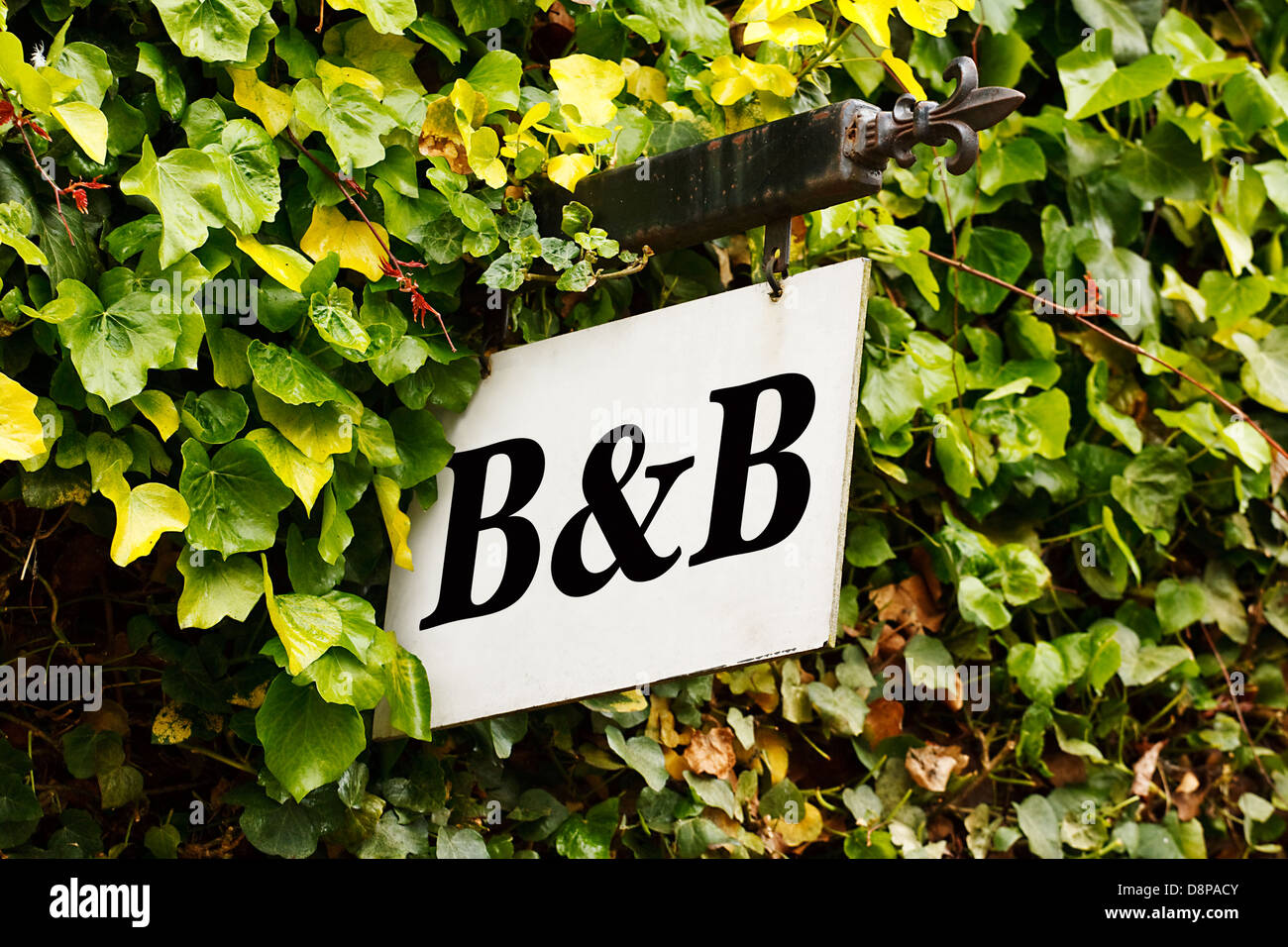 Traditional Bed and breakfast sign surrounded by an ivy creeper - Stock Image