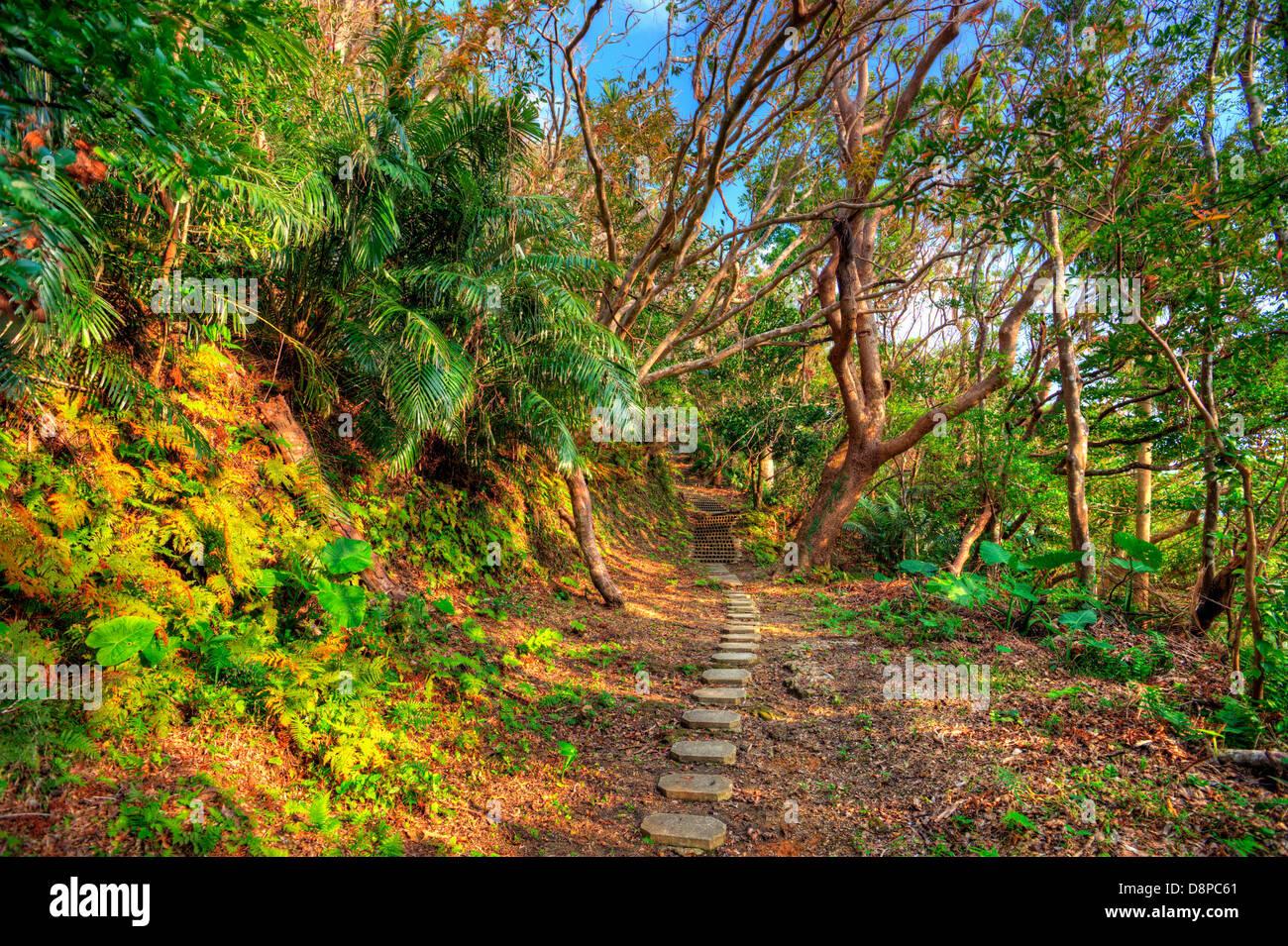 Hiking trail the jungle of Okinawa, Japan. - Stock Image