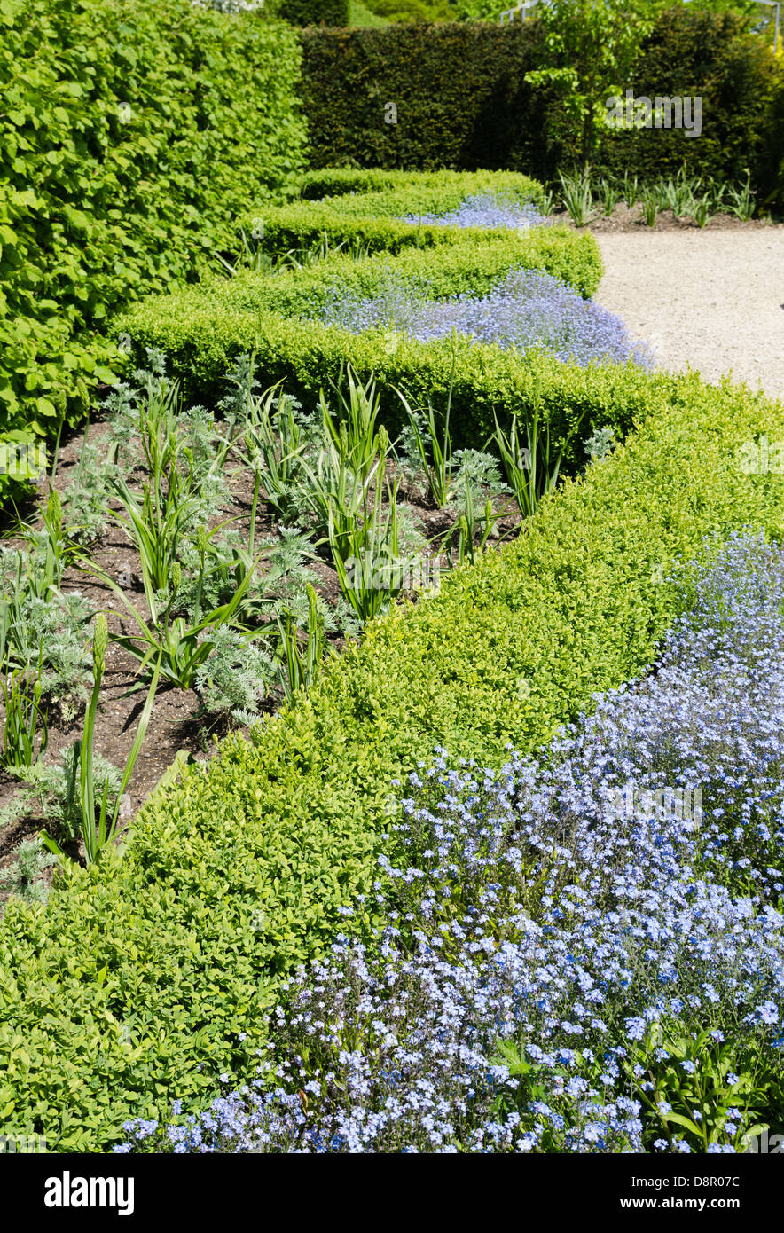 Box hedging in an English garden - Stock Image