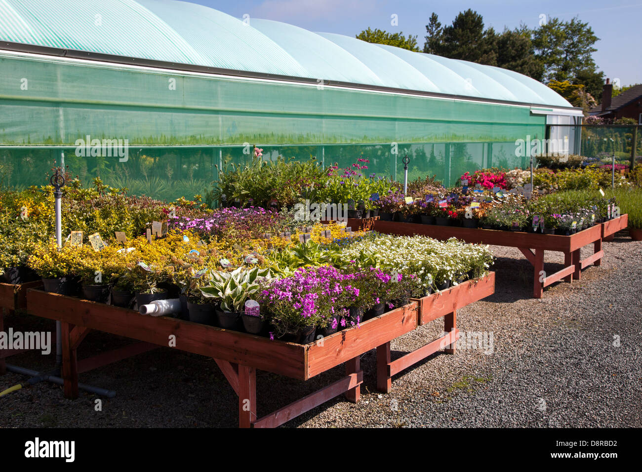 Greenhouses and nursery bedding plants for sale at J.A. Jones Nursery in Southport, Merseyside, UK - Stock Image