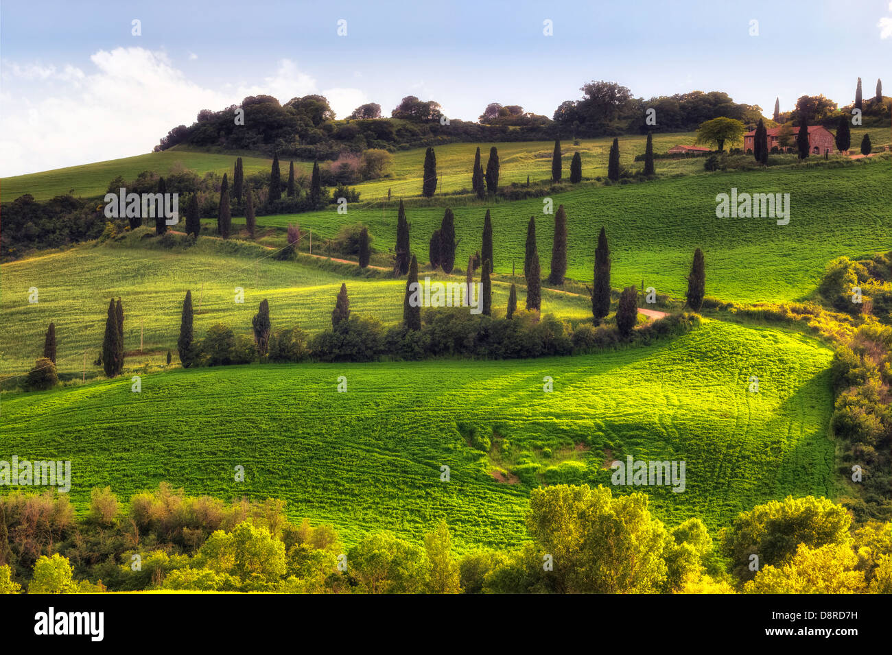 cypress alley in Val d'Orcia - Stock Image