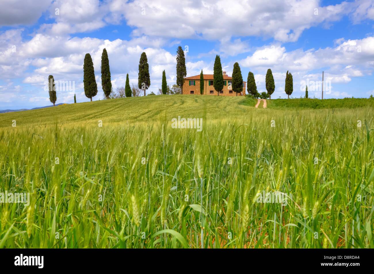 farm house in Val d'Orcia, Pienza, Tuscany, Italy - Stock Image