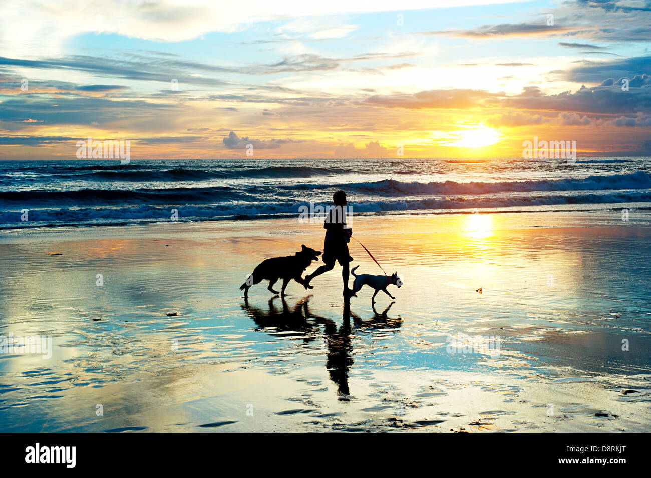 Man with a dogs running on the beach at sunset. Bali island, Indonesia Stock Photo