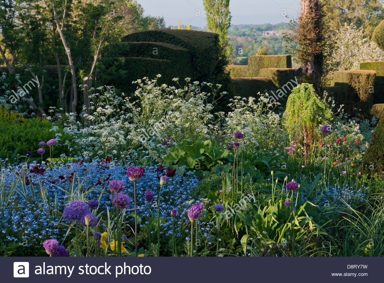 wide informal borders Alliums forget me nots cow parsley Euphorbia geraniums Great Dixter East Sussex England United - Stock Image